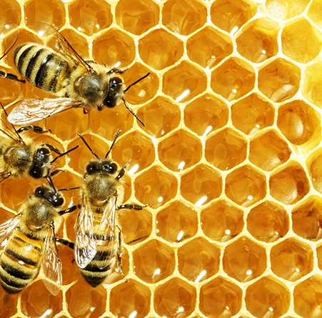 HONEY COMBS AND BEES